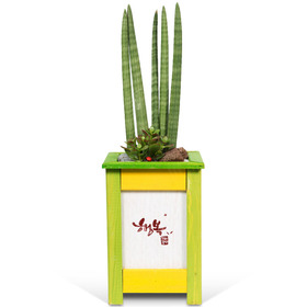 고급 공기정화식물 스투키(높이 약70cm내외)