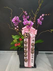 호접란(핑크무늬종)